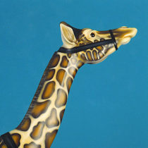 1905_Mexican_Muller_Giraffe-head