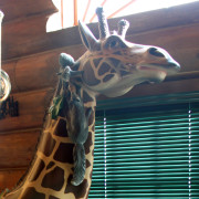 1906_PTC_giraffe-head-bust