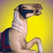 AH_Blanket_Pony-c1926-bust