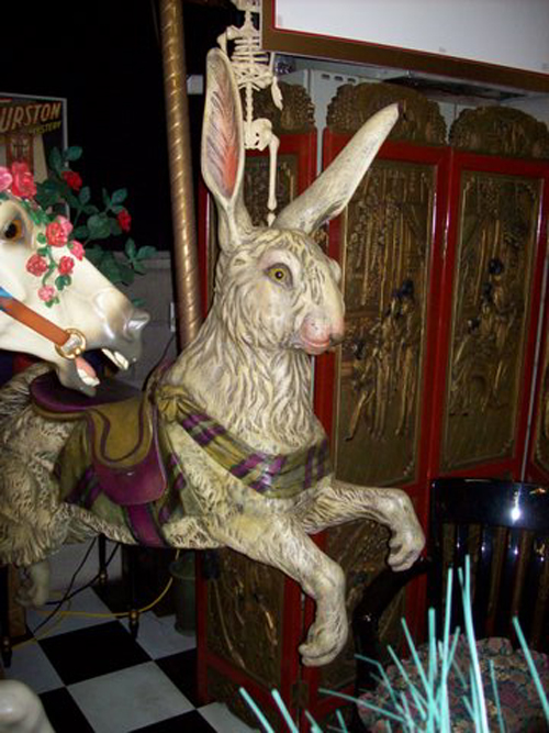 Rabbit_1
