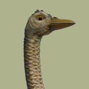 c.1905_Dentzel_Ostrich.8-bust-color