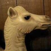 Ca-1906-PTC-camel-head4