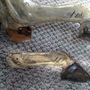 spillman-legs