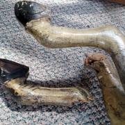 spillman-rear-legs